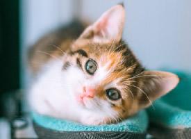 活潑可愛的小貓咪圖片