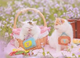 一組可愛軟萌貓咪圖片