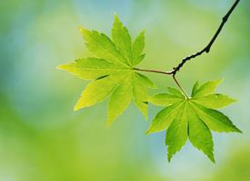 小清新綠色養眼植物桌面壁紙