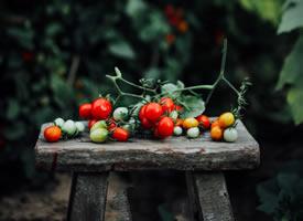 一组美美的小番茄图片欣赏