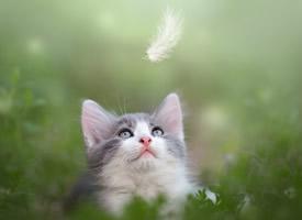 軟萌可愛的貓咪圖片桌面壁紙