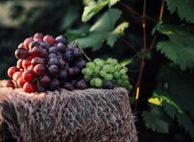一组糖分十足的葡萄图片欣赏