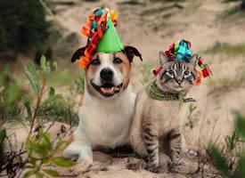 一只狗和一只貓的旅行圖片欣賞