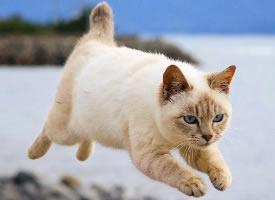 一組飛行中的貓圖片欣賞