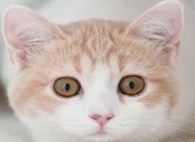 一組可愛軟萌的小貓圖片