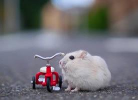 小仓鼠的单身生活,还真是丰富多彩呢