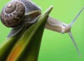 一组艰难爬行的蜗牛图片