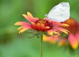 蜜蜂和蝴蝶在花中飞舞的图片