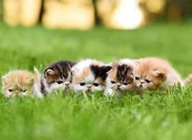 一群超級可愛的小貓咪圖片欣賞