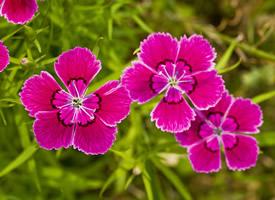 近距花朵图片摄影高清图片欣赏