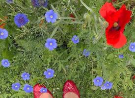 一組生機勃勃的花花草草圖片
