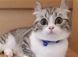 一组可爱软萌的小猫咪图片