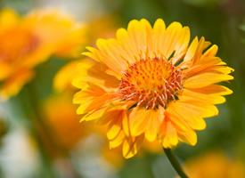 清新好看的黄色花卉图片欣赏