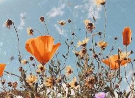 一組好看唯美的花草圖片
