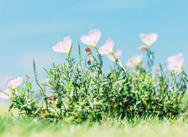 小清新風景植物手機壁紙圖片