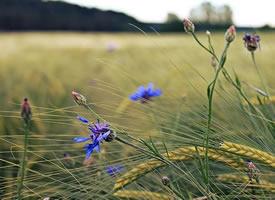 一組綠色的花花草草美景圖片欣賞