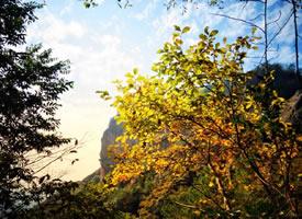 一組秋天唯美樹葉美景圖片欣賞