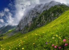 一組清新唯美的自然森林風景壁紙
