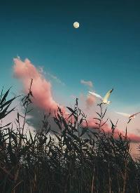 一组超美的日暮摄影图片