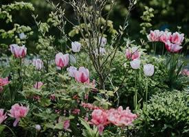 一組美麗的自然花花草草圖片欣賞