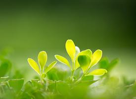 清新養眼植物綠葉桌面壁紙