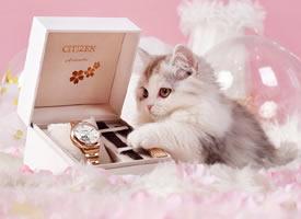 一组粉粉的超美丽的猫猫图片欣赏