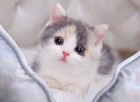 一组超可爱的绝世美颜猫猫图片