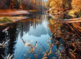 九月的心,已經落滿了十月的秋林