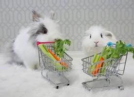 一組超級呆萌的兔寶寶圖片欣賞