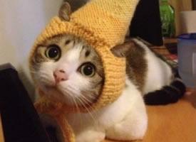 一组乖巧好奇的猫咪图片