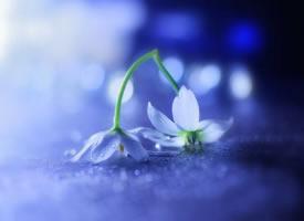 失望到一定程度后,反而會開出一朵花來,那朵花的名字叫無所謂