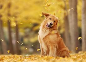 一组可爱的不同种类狗狗图片欣赏