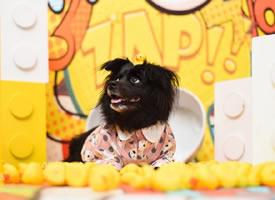 一组黑色长毛毛的狗狗图片欣赏