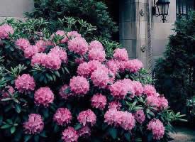 花就是美好的象征