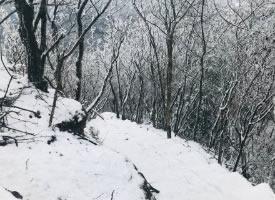 這么美的雪景來自3月的天曌山