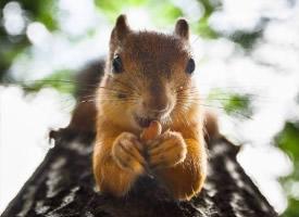 一組毛茸茸的松鼠圖片