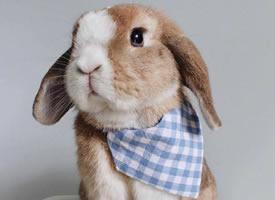 自帶美瞳的小兔幾Bumble,氣質高貴