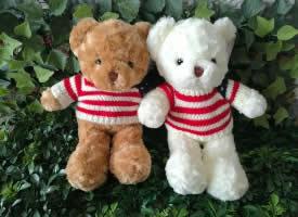 各種款式的泰迪熊圖片