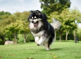 走路带风有飘逸感的小狗狗图片