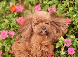 一组可爱开心的小狗狗图片欣赏