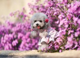 一組超可愛花叢中的狗狗圖片欣賞