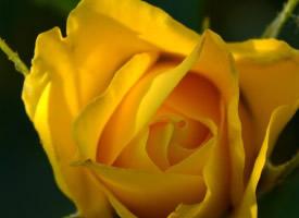 高清唯美清新花朵手机壁纸图片