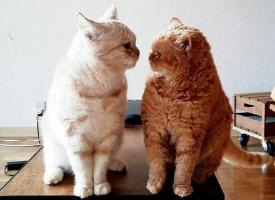 两只活泼可爱的猫咪图片