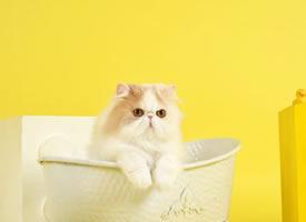 一組大眼萌貓拍攝圖片欣賞