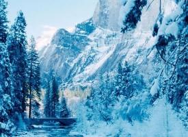 一組冬季森林雪景圖片