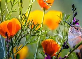 绚丽梦幻的花朵高清壁纸图片