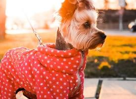 可爱的小美女狗狗高清图片