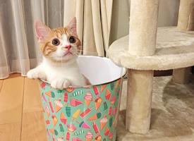 一組可愛呆萌的橘色小貓圖片欣賞