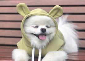 泡菜国的微笑小天使Angpang狗狗