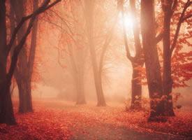 一組林間秋色之美高清風景圖欣賞
